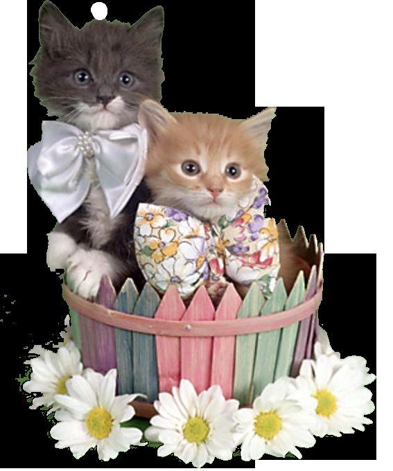 01 Март - Международен ден на котки!