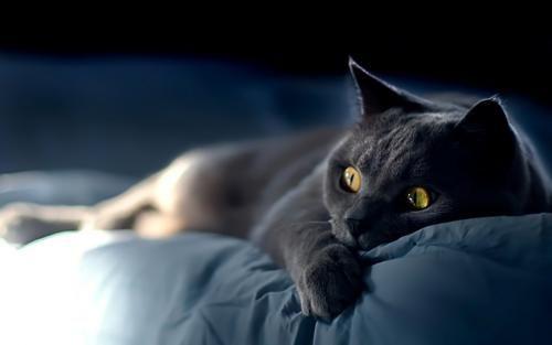 20 Výdavky vzťahujúce sa k obsahu mačky
