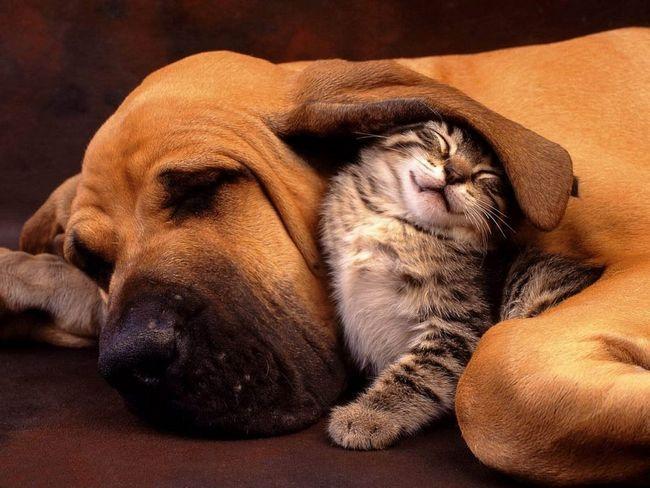 Mačka a pes - priatelia