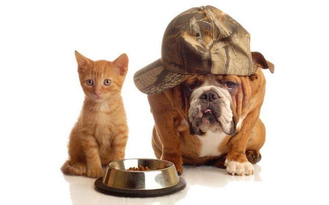 Mačka a pes môže žiť spolu