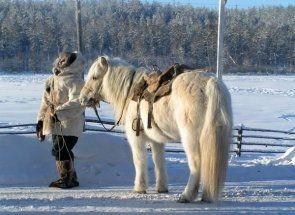Native konj: pouzdan asistent u teškim regijama