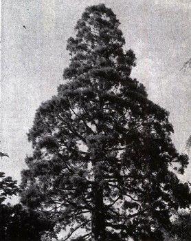 Foto 1 din Africa și America