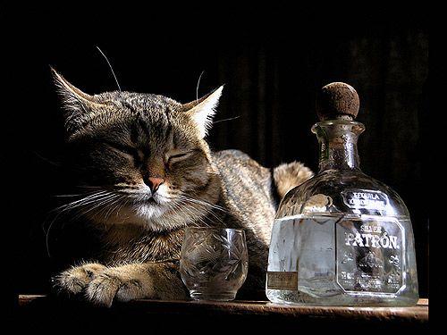Mačka ležiace vedľa fľašu whisky. Fotografie, Photo Image