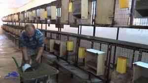 Alimentatoare pentru iepuri 3,5 l:. Prețul de vânzare în regiunea Ivano-Frankivsk, iepure Plus