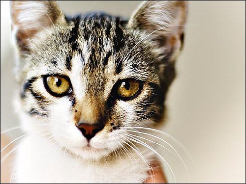 Mačkou, detailné ňufák. Fotografie, obrázok, animal picture