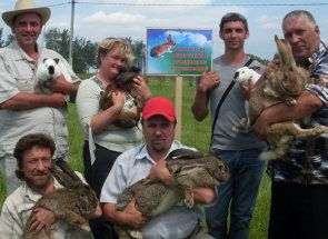 Bieloruský králik: ako živých králikov v tejto krajine?
