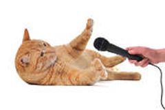 Rozhovor s domácim zvieraťom