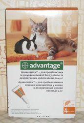 Blchy u mačiek: Ako sa ich zbaviť