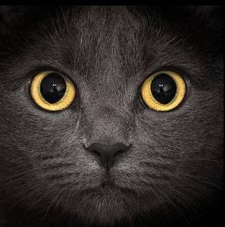Strach z mačiek: príčiny, ako sa zbaviť obáv
