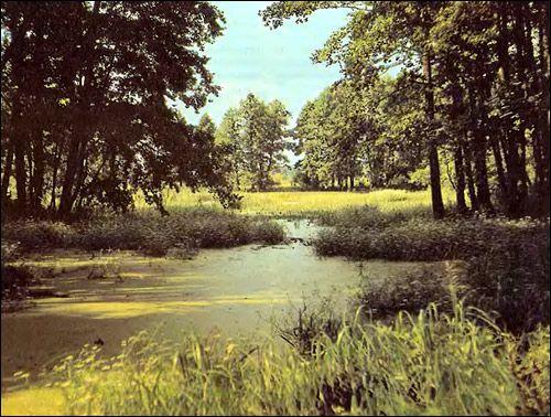 pădure de vară. Foto, Foto