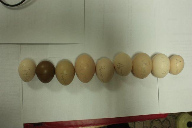 Jaja različitih vrsta fazana