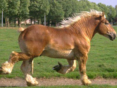 ťažný kôň