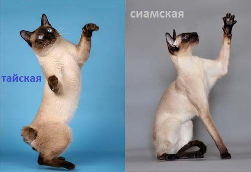 Pisicile și câinii meditați. fotografie