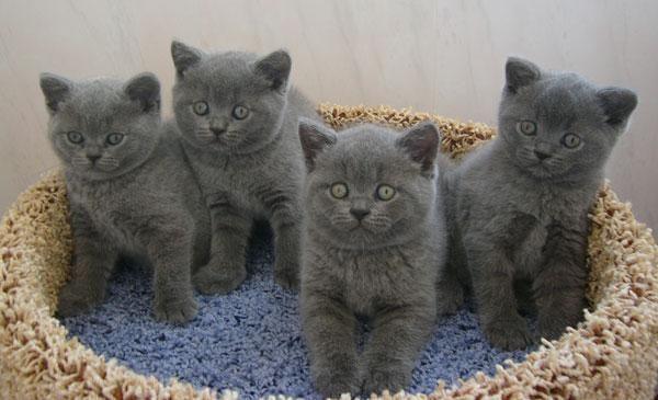 mačići