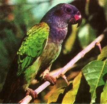 Foto 3 Centrală și America de Sud