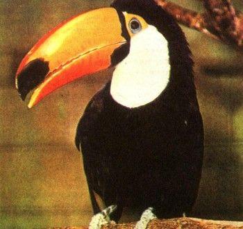 Foto 9 Centrală și America de Sud