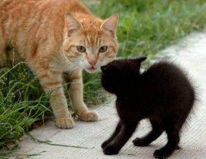 Какво е страх котка или котка ксенофобията