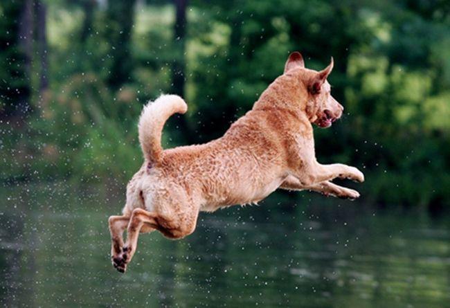 Skakanje u vodu Chesapeake