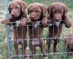 Tri štenci u kavezu