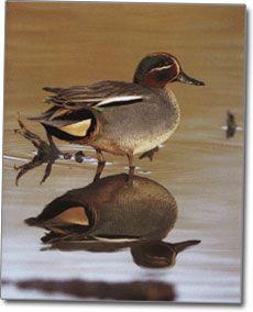 Зимно бърне снимка птици