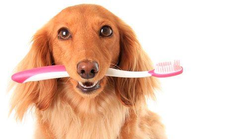Perete zube i ukloniti kamenac iz pasa