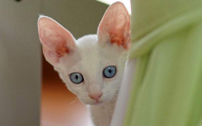 Zápal stredného mačku: aké sú jej príznaky?