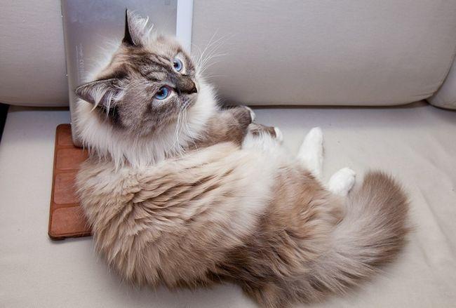 Funny mačička odpočíva