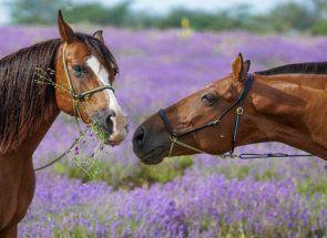 Čo vieme o koňoch: najzaujímavejšie fakty