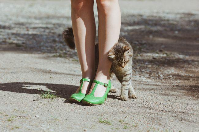 Čo robí mačky ísť k tým, kto sa im nepáči