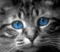 Mačacie oči Ojos Azules (Badile)
