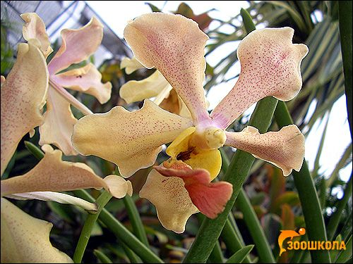 Орхидеи. Orchid Park наоколо. Бали. Снимки, снимки на цветя картина