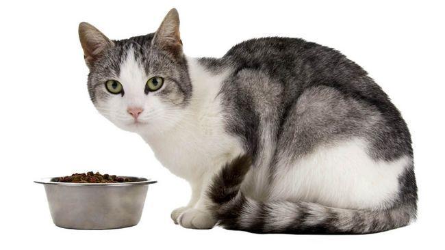 krmivo pre mačky Sanabel