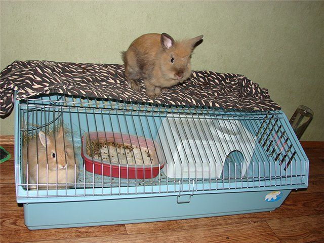 Urecheat animale de companie și casa lor