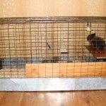 Rabbit într-o celulă improvizat