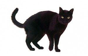 Черна котка ден