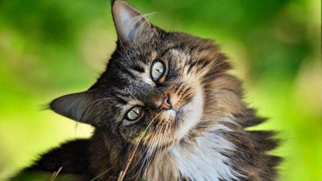 All-ruskej Day mačiek.