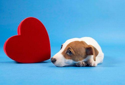 Dijagnoza i liječenje zatajenja srca kod pasa