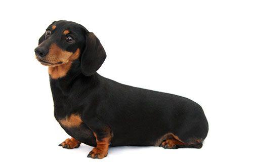 Diskopatija: ima li šanse da pas na ispunjen život?