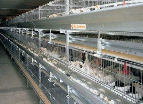 Sfaturi de uz casnic: cum să păstreze găinile ouătoare în cuști