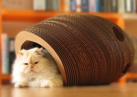 Mačka kuća od kartona