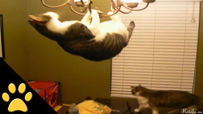 tréningové mačky