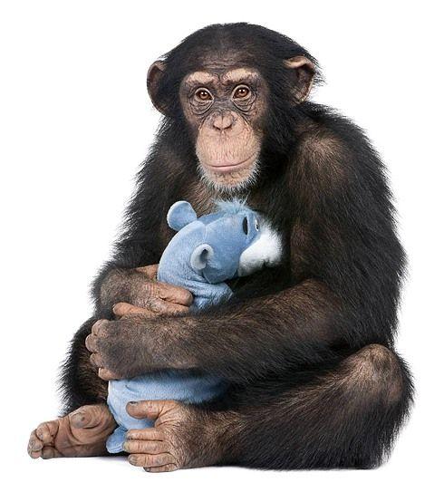 tréningové opice