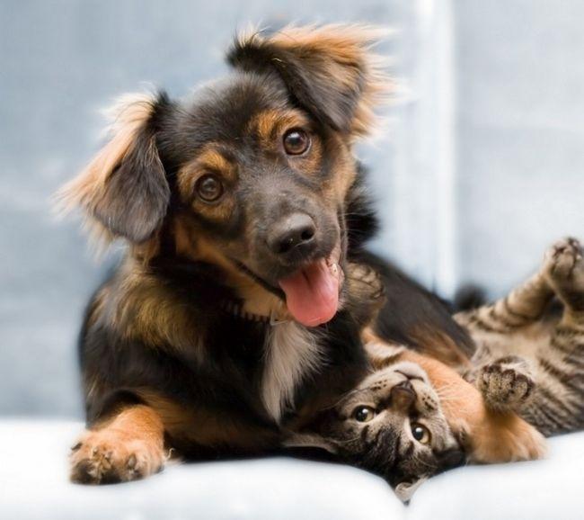 psy a mačky hra