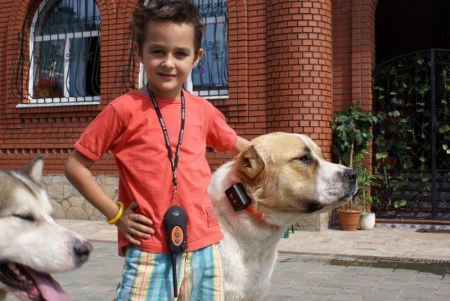 Pes elektronické golier