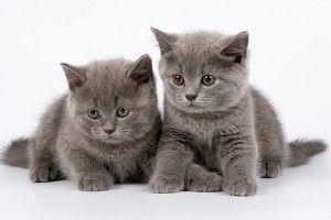 Две котки в къщата