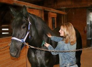 Ak máte koňa: naučiť sa správne starať