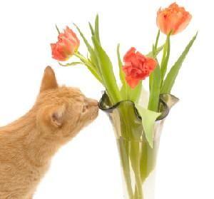Ако котката изяжда цветя