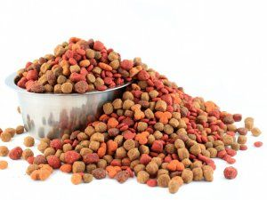 Nepravilno hranjenje psa - uzrok dijareje