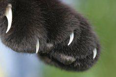 Уверенность кошкам придают когти