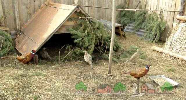 adăpost improvizat pentru păsări